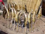 鮎の塩焼き(1)