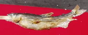 鮎の塩焼き(2)