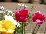 花の写真(1)