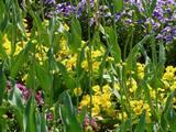 花の写真(2)