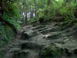 泥道の急坂